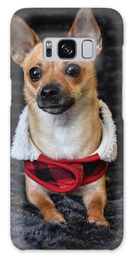 Chihuahua Galaxy S8 Case featuring the digital art Miracle by Cassidy Marshall