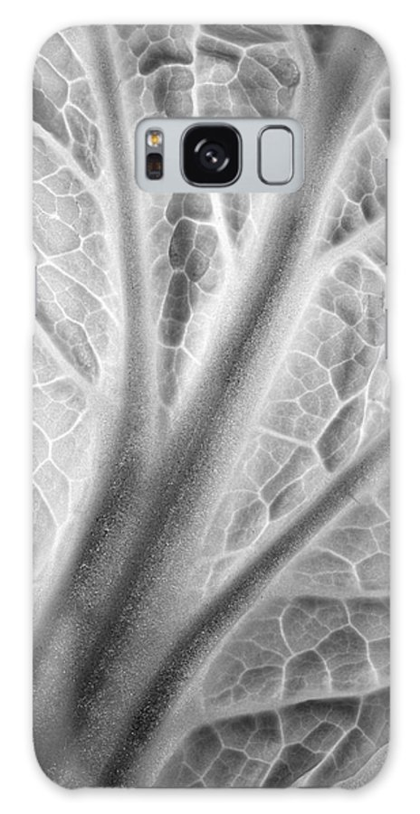 Napa Galaxy S8 Case featuring the photograph Napa Cabbage 2816 by Bob Neiman