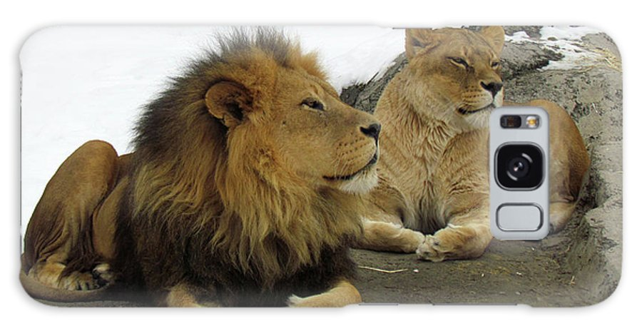 Animal Themes Galaxy Case featuring the photograph Pair Of Lions by Images By Nancy Chow