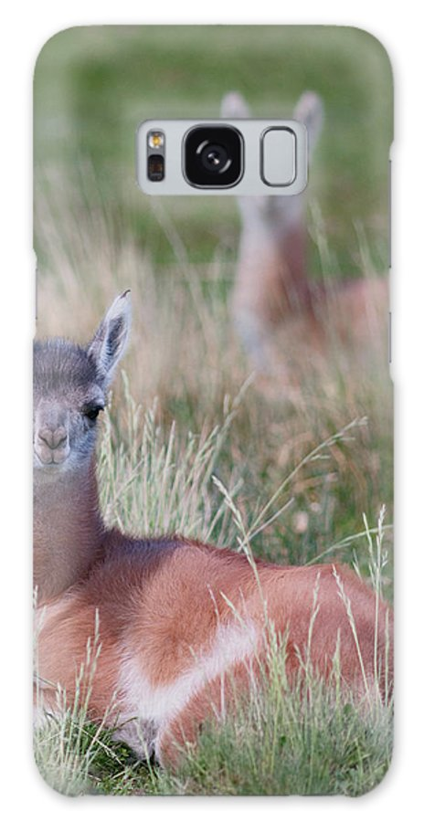 Animal Galaxy S8 Case featuring the photograph Patagonia, South America by Karen Ann Sullivan