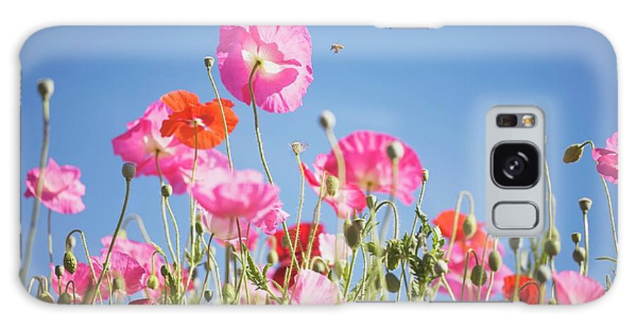 Snow Galaxy Case featuring the photograph Pink Flowers Against Blue Sky by Design Pics/craig Tuttle