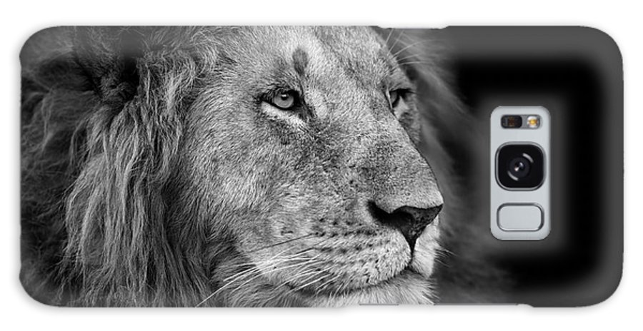 Big Galaxy S8 Case featuring the photograph Portrait Of A Big Lion From Rekero by Maggy Meyer