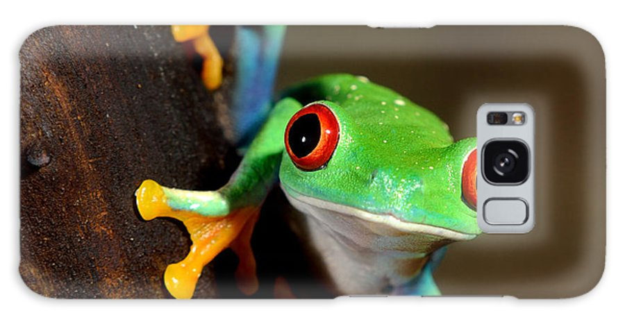 Forest Galaxy S8 Case featuring the photograph Red-eye Frog Agalychnis Callidryas In by Aleksey Stemmer