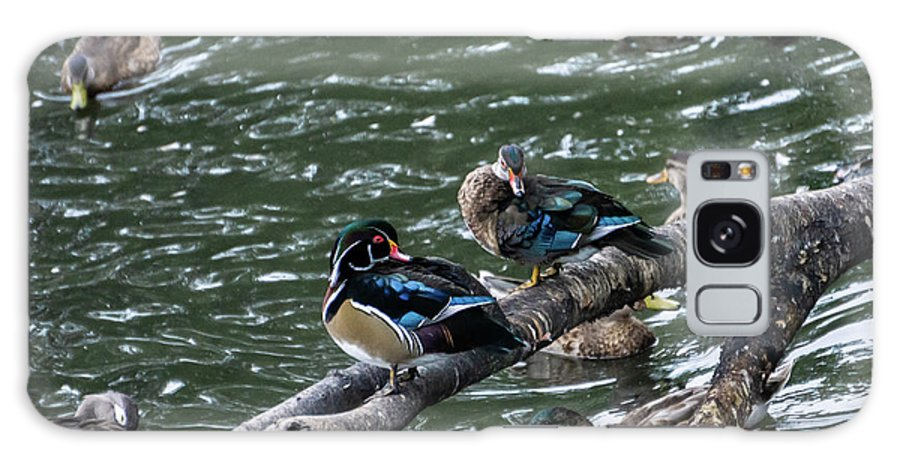 Duck Galaxy Case featuring the photograph Resting Ducks by Rob Olivo