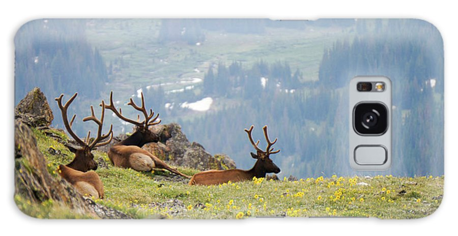 Rocky Galaxy S8 Case featuring the photograph Rocky Mountain Elk 1 by Richard A Brown