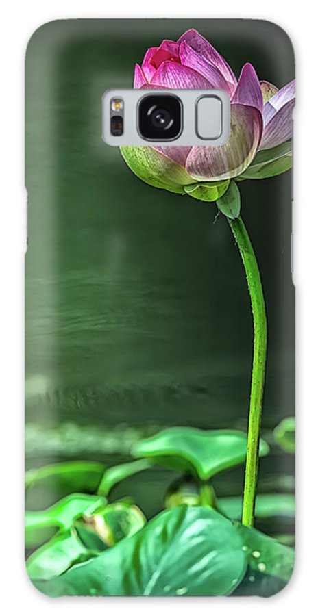 Lotus Flowers Galaxy Case featuring the digital art Singular Lotus by Tom Stovall Sr