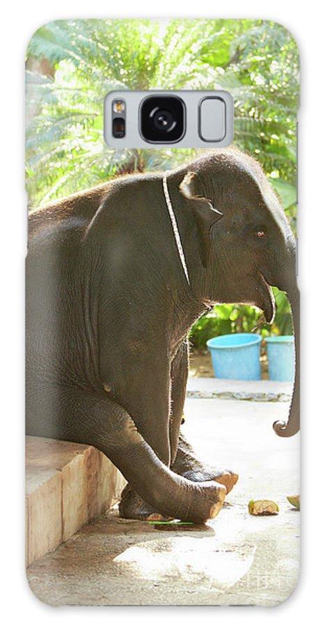 One Animal Galaxy Case featuring the photograph Sitting Elephant by Pasha Ivaniushko