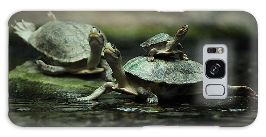 Pond Galaxy Case featuring the photograph Southern River Terrapin Batagur by Vladimir Wrangel