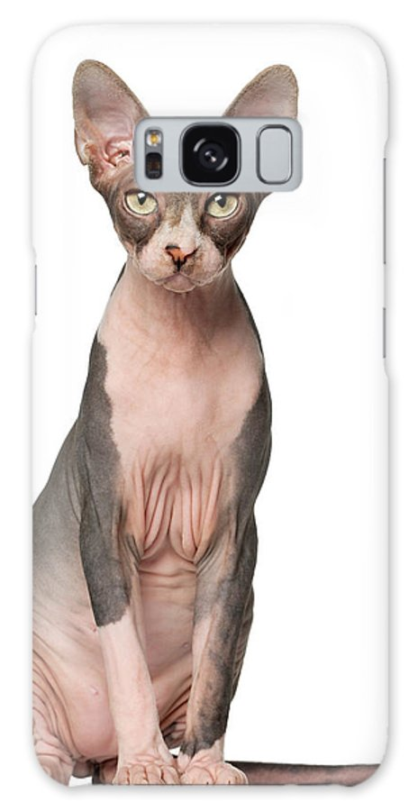 Pets Galaxy Case featuring the photograph Sphynx 7 Months Old Sitting by Life On White