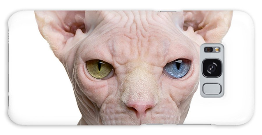 Studio Galaxy S8 Case featuring the photograph Sphynx Cat, 1 Year Old, In Front Of by Eric Isselee
