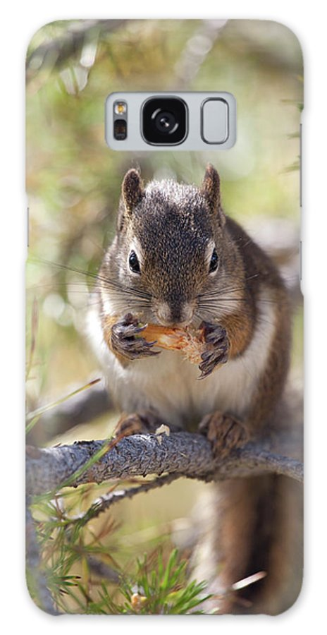 Animal Themes Galaxy Case featuring the photograph Squirrel Eating by Nathan Blaney