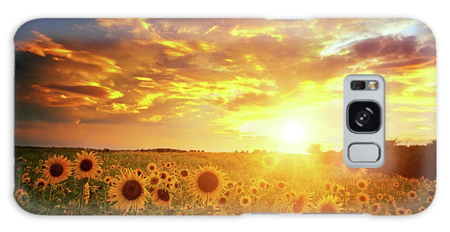 Scenics Galaxy Case featuring the photograph Sunflowers Field And Sunset Sky by Avalon studio