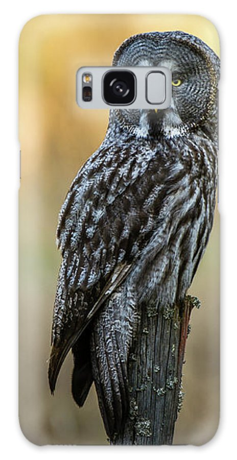 Great Grey Perching Galaxy S8 Case featuring the photograph The Great Gray Owl In The Morning by Torbjorn Swenelius