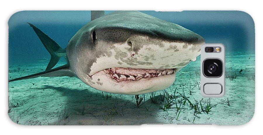 Underwater Galaxy Case featuring the photograph Tiger Sharks Galeocerdo Cuvier Are by Rodrigo Friscione