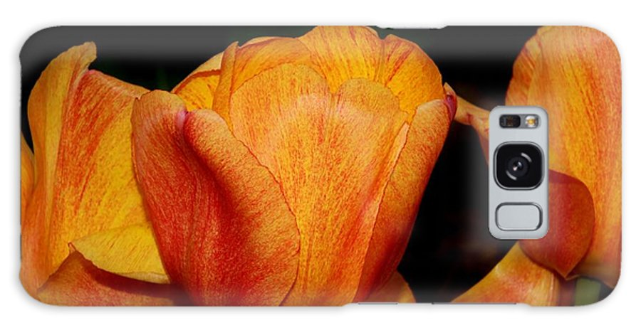 Karen Silvestri Galaxy S8 Case featuring the photograph Tulips On A Black Background by Karen Silvestri