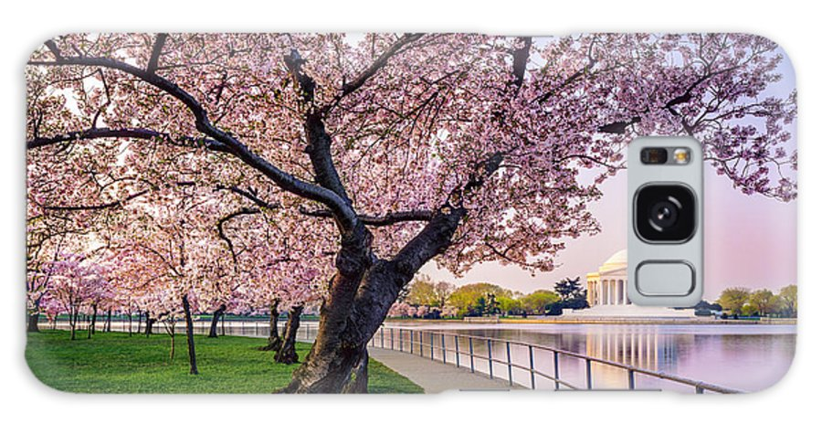 Tidal Basin Galaxy Case featuring the photograph Washington Dc Cherry Trees, Footpath by Dszc