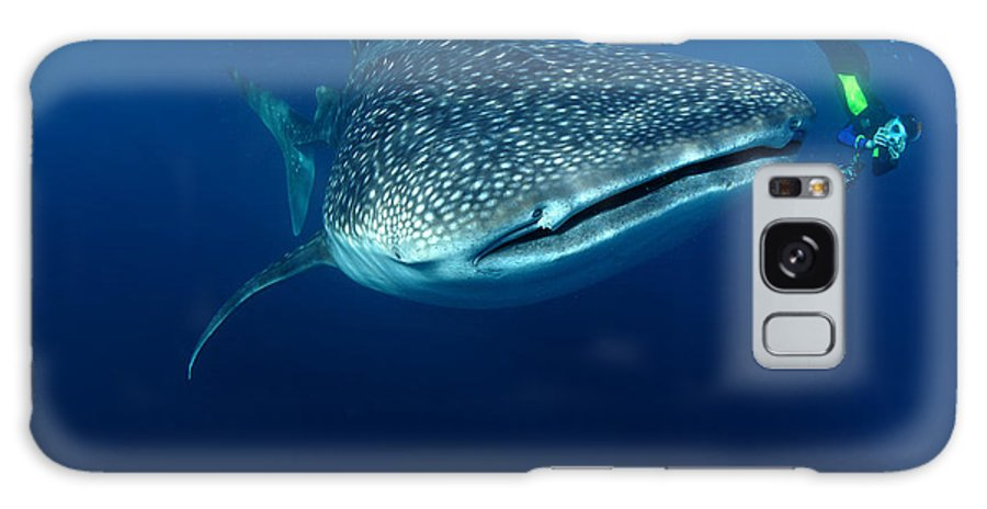 Galaxy S8 Case featuring the photograph Whale Shark & Snorkeller Rhincodon by Davidpstephens