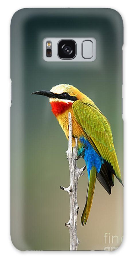 Bee Galaxy S8 Case featuring the photograph Whitefronted Bee-eater Merops by Johan Swanepoel