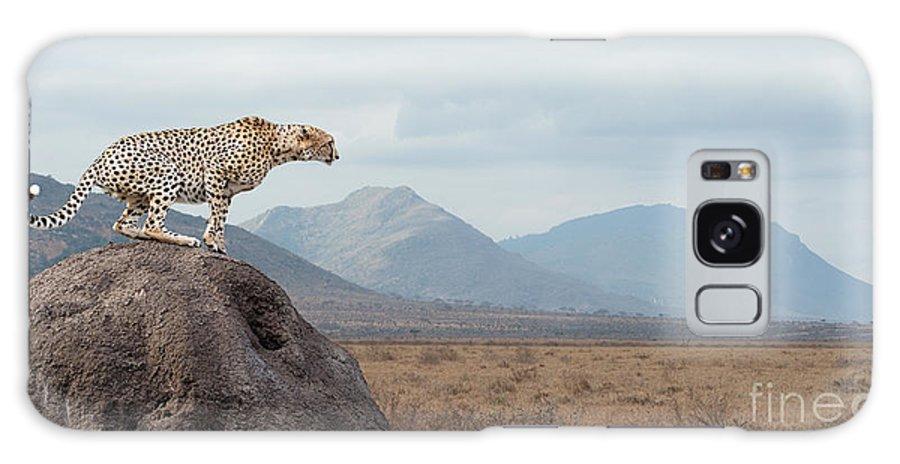 Big Galaxy S8 Case featuring the photograph Wild African Cheetah, Beautiful Mammal by Volodymyr Burdiak