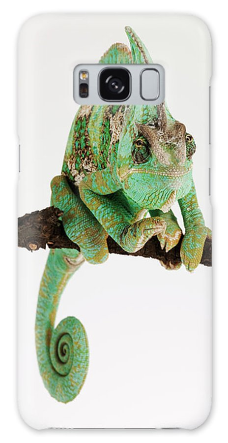 White Background Galaxy Case featuring the photograph Yemen Chameleon Sitting On Branch by Martin Harvey