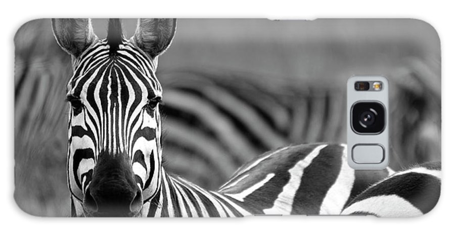 Plains Zebra Galaxy Case featuring the photograph Zebra by Wldavies