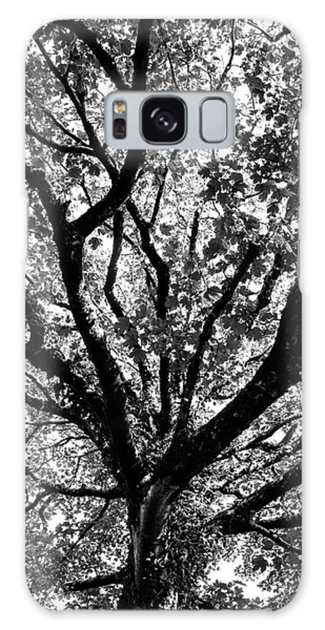 Black And White Galaxy Case featuring the photograph Autumn Sycamore by Bear R Humphreys