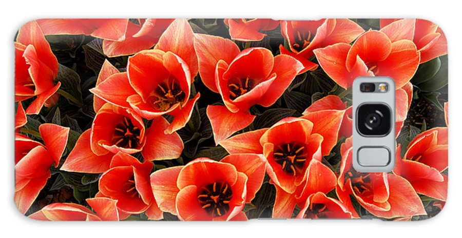 Bouquet Red Orange Tulips Galaxy Case featuring the photograph Bouquet of Red-Orange Tulips by Keith Gondron