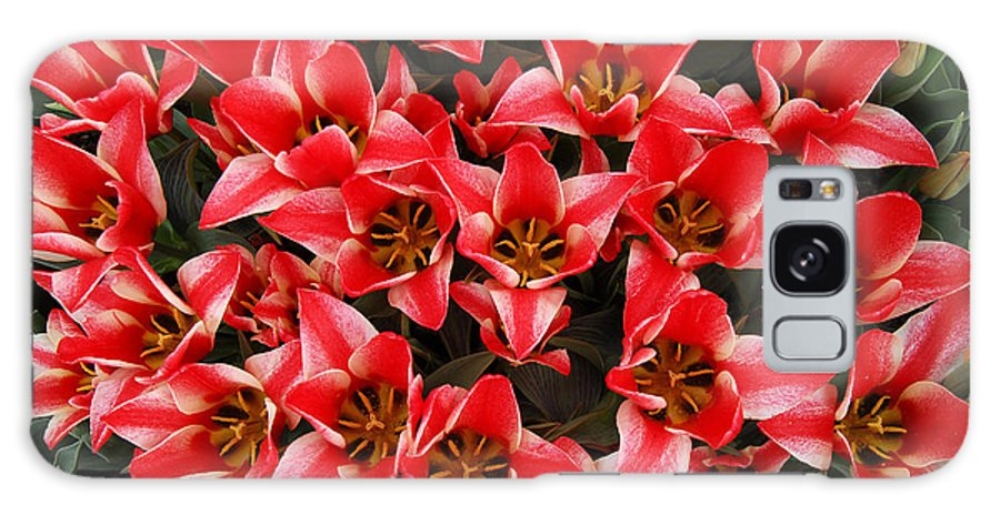 Red Tulips Arrangement Bouquet Galaxy Case featuring the photograph Bouquet of Red Tulips by Keith Gondron