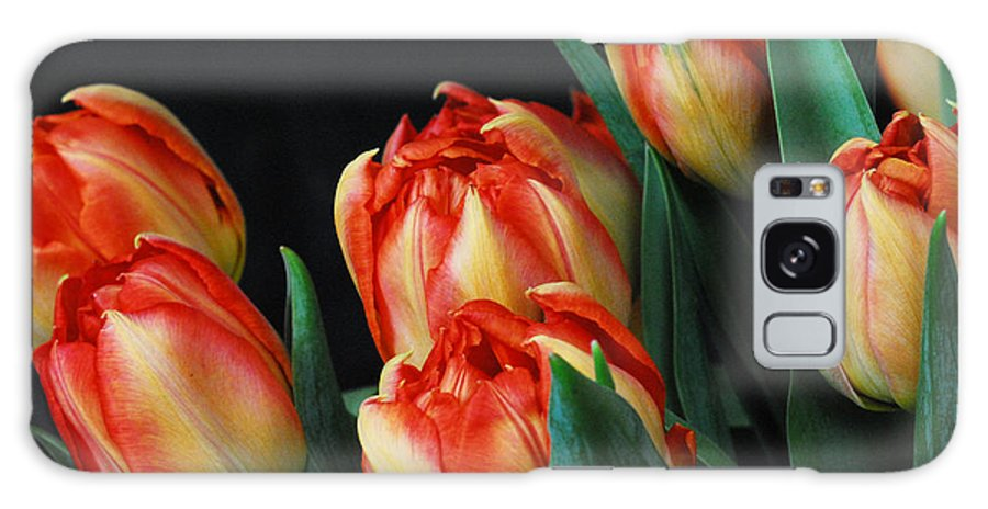 Tulip Galaxy Case featuring the photograph Budding tulips by Keith Gondron