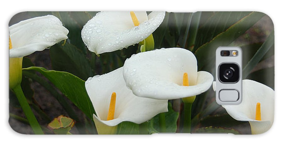 White Calla Lilies Galaxy S8 Case featuring the photograph Calla Calypso by Suzanne Gaff
