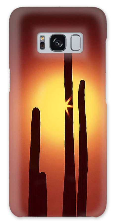 Sun Galaxy S8 Case featuring the photograph Encinitas Cactus by Andre Aleksis
