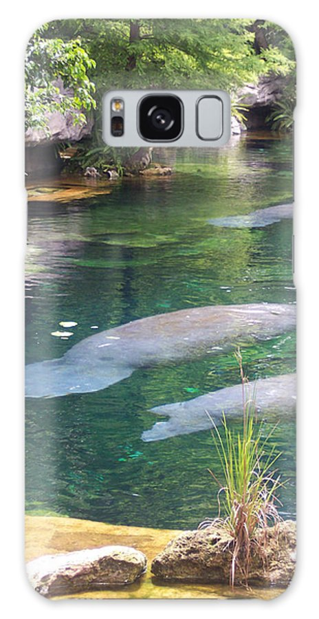 Manatee Galaxy Case featuring the photograph Manatee Serenity by Pharris Art