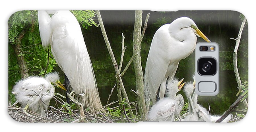 Great White Egret Galaxy S8 Case featuring the photograph Mom n Pop n Chicks by Suzanne Gaff