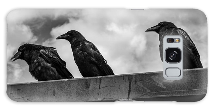 Three Galaxy Case featuring the photograph Three Crows 2 by Damon Dulewich