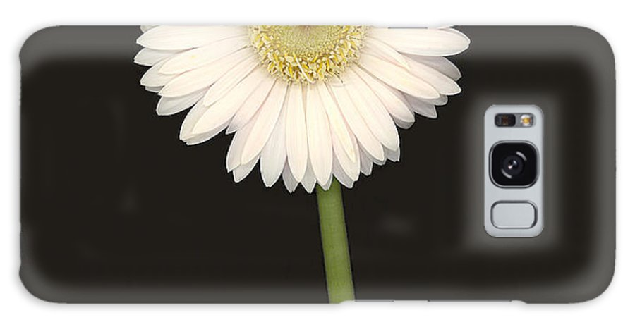 Gerbera Daisy Galaxy S8 Case featuring the photograph White Gerbera Series I by Suzanne Gaff