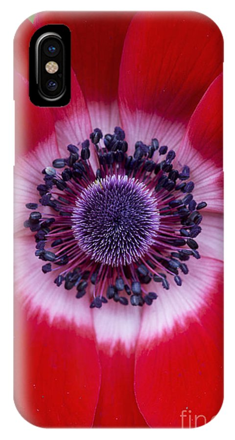 Anemone Coronaria IPhone X Case featuring the photograph Anemone Coronaria Harmony Scarlet Flower by Tim Gainey