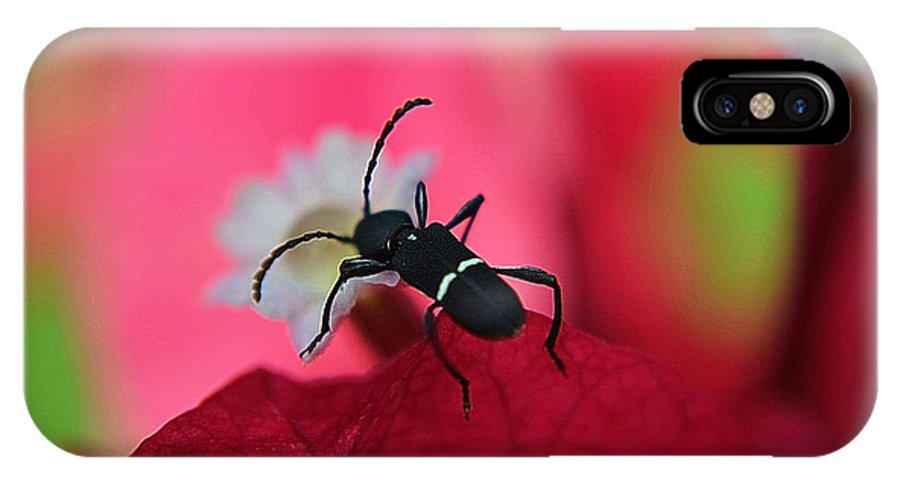 Michelle Meenawong IPhone X / XS Case featuring the photograph Black Bug by Michelle Meenawong
