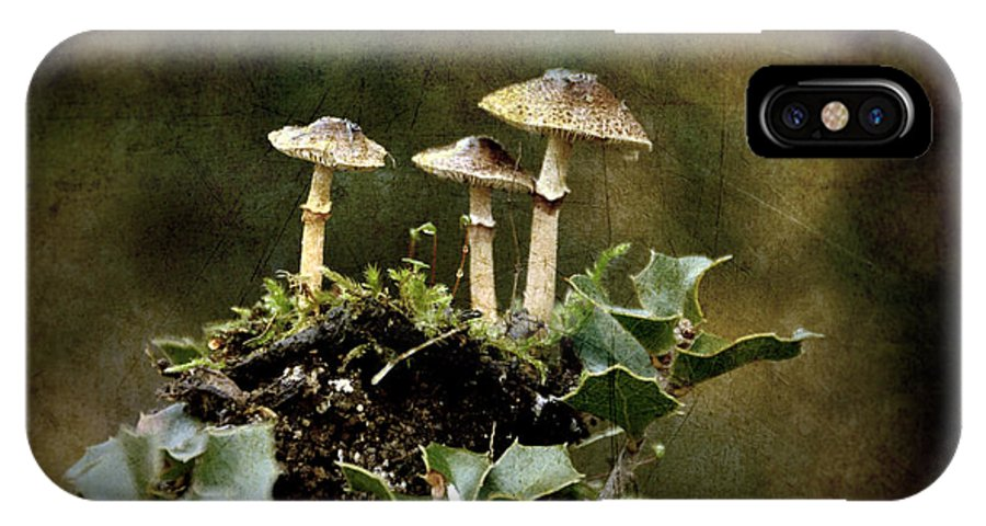 Mushrooms IPhone X Case featuring the photograph Little Mushrooms by RicardMN Photography