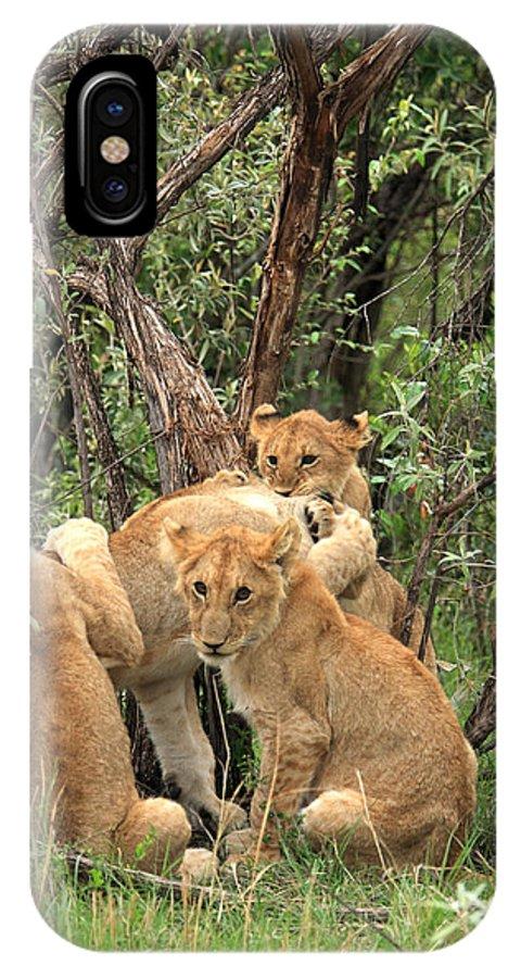 Africa IPhone X Case featuring the photograph Masai Mara Lion Cubs by Aidan Moran