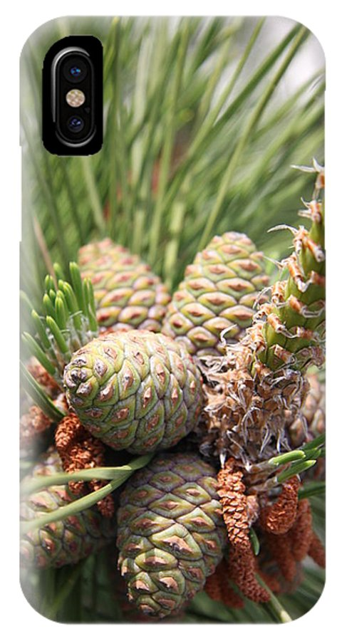 Pine IPhone X Case featuring the photograph Pine Cones by Christiane Schulze Art And Photography