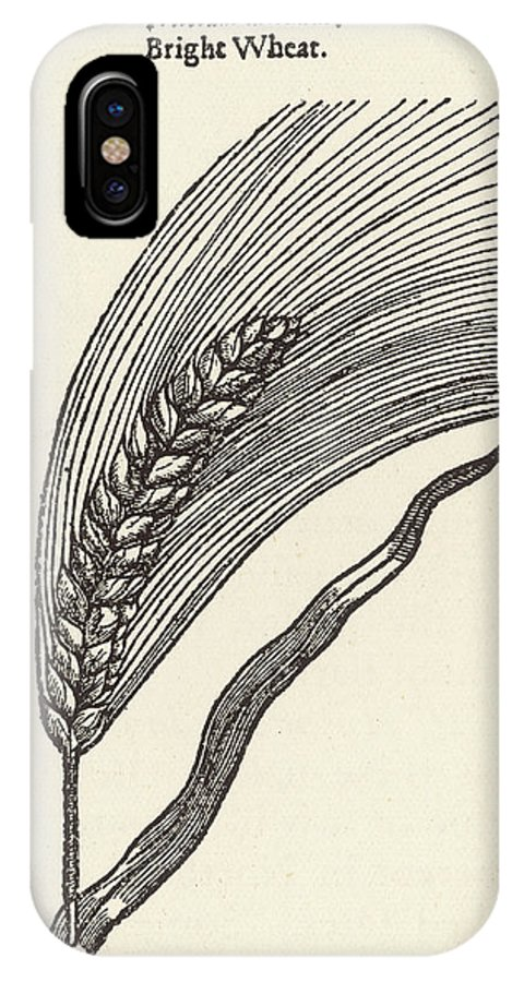 Plants IPhone X Case featuring the drawing Triticum Lucidum Bright Wheat by Mary Evans Picture Library