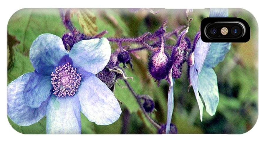 Rose IPhone X Case featuring the photograph Wild Blue Rose by Robert Burns