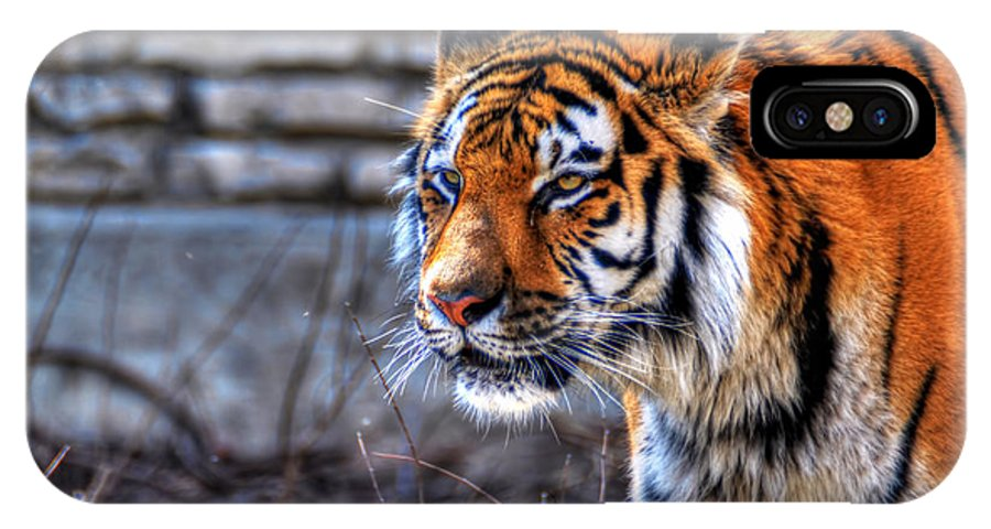 Animals IPhone X Case featuring the photograph 0010 Siberian Tiger by Michael Frank Jr