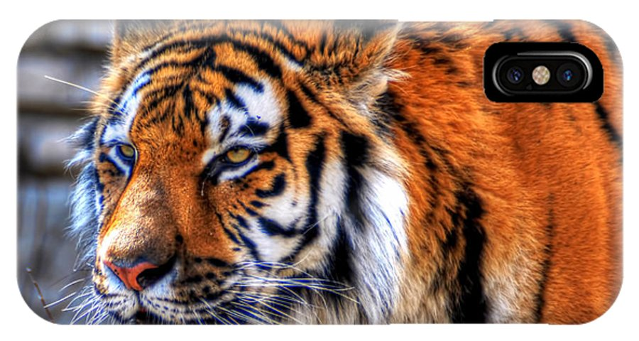 Animals IPhone X Case featuring the photograph 0011 Siberian Tiger by Michael Frank Jr