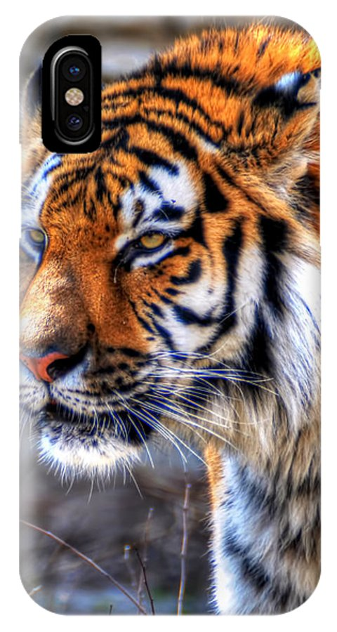 Animals IPhone X Case featuring the photograph 0013 Siberian Tiger by Michael Frank Jr