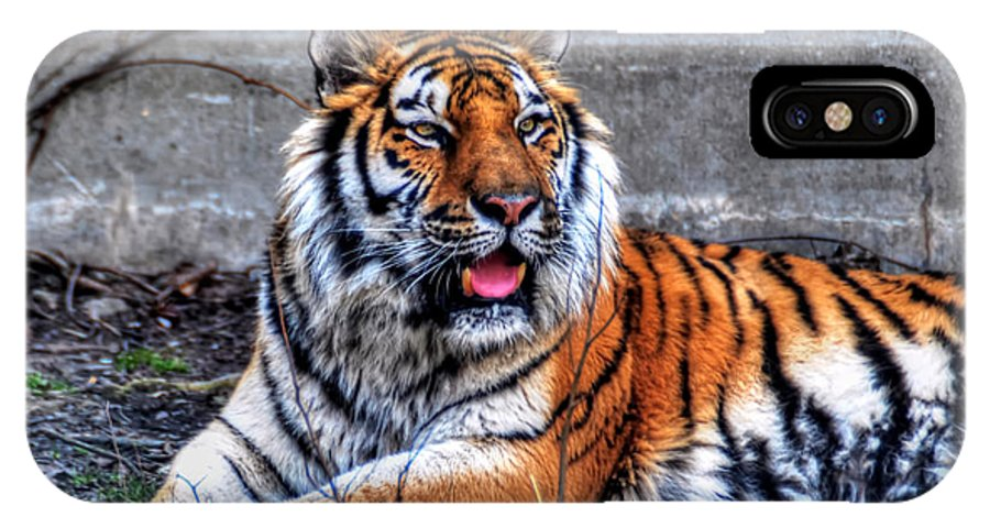 Animals IPhone X Case featuring the photograph 003 Siberian Tiger by Michael Frank Jr