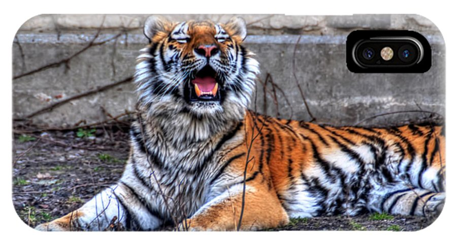 Animals IPhone X Case featuring the photograph 007 Siberian Tiger by Michael Frank Jr