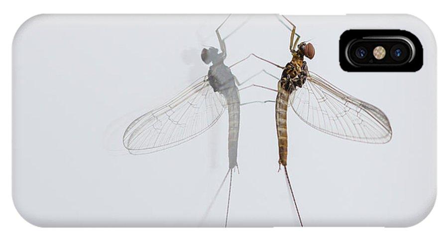 Baetidae IPhone X Case featuring the photograph 02 Cloeon Mayfly On My Window by Jivko Nakev