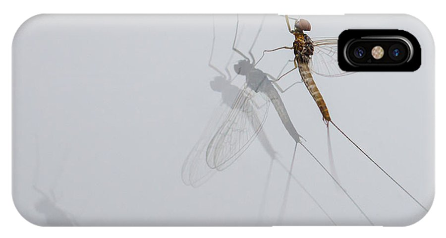 Baetidae IPhone X Case featuring the photograph 05 Cloeon Mayfly On My Window by Jivko Nakev