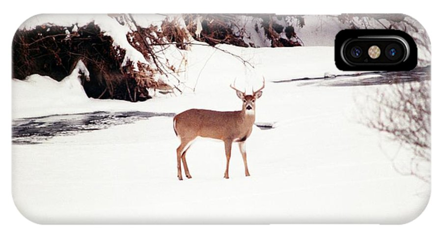 Whitetail Deer IPhone X Case featuring the photograph 080706-89 by Mike Davis